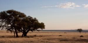 Landscapes - South plains 2