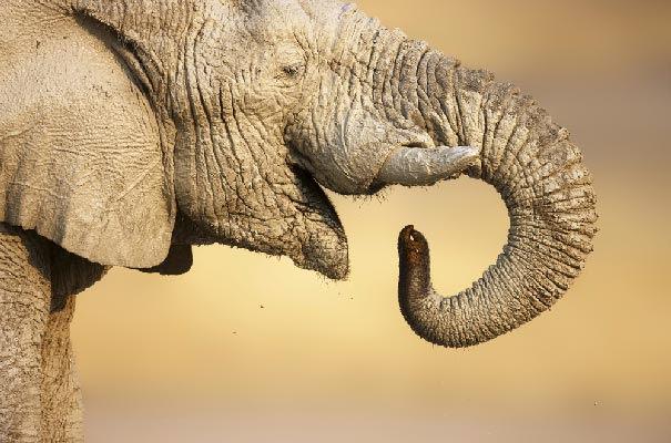 Etosha - Elephant close-up